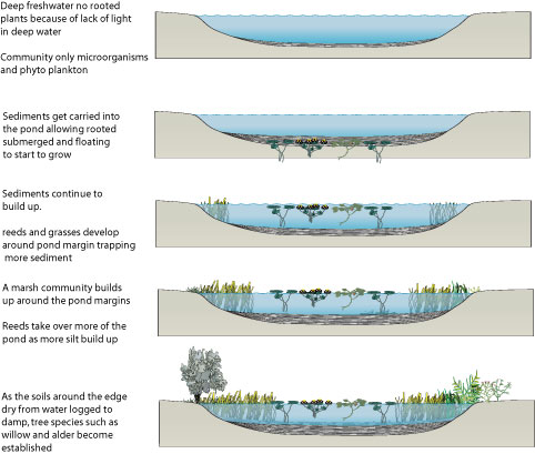 colonisation and succession in an ecosystem Mangrove swamps (colonisation & succession)  an ecosystem is a community of living organisms interacting with one another and with non-living organisms.